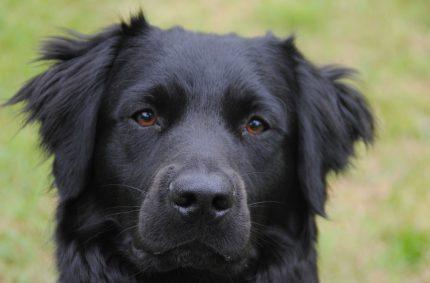 Kunnen honden Fusarium opsporen?