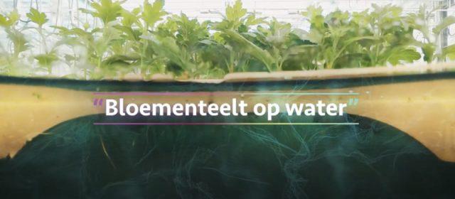 Bloementeelt op water bij Proeftuin Zwaagdijk