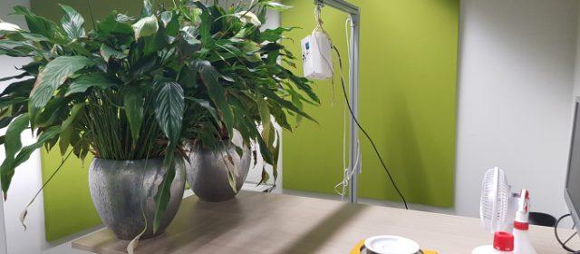 Luchtzuivering door planten vult ventilatie goed aan